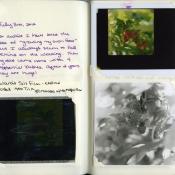 July 3, 2012 journal final