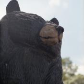 Como park bear