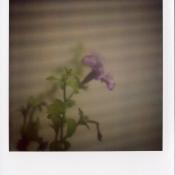 sx-70_779_film005