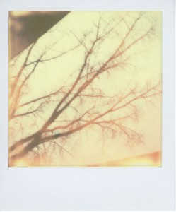 March_008