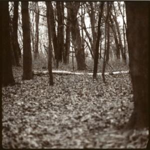 November_2011003