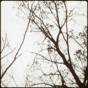 November_2011005