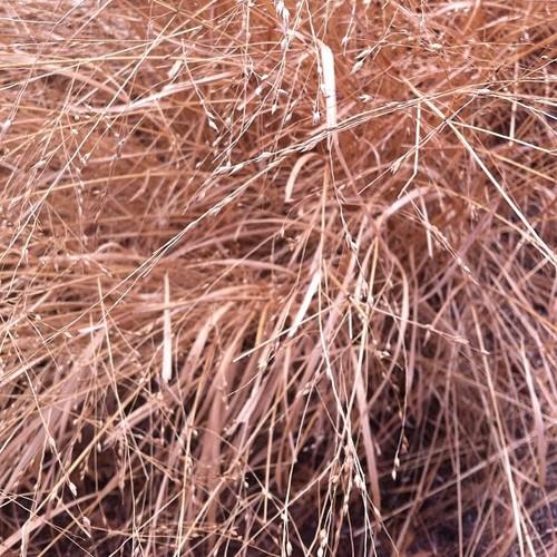Grass #365 #day89