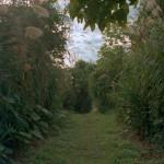 Okinawa: walk through the ancient spots