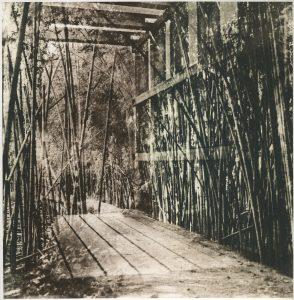 Walk The Path Through The Bamboo